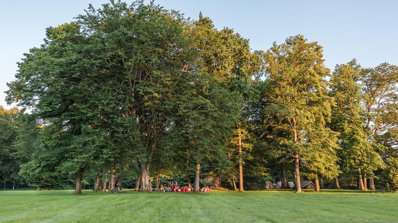 Les arbres du domaine