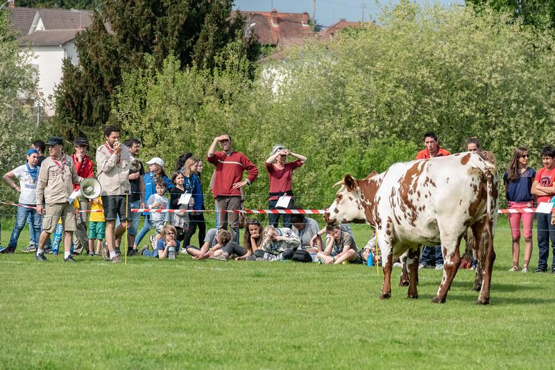Loto-Vache
