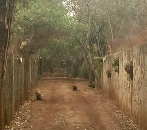 Nairobi Garden Wildlife