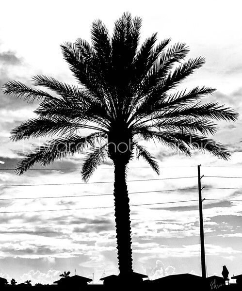 Palm Tree In The City Silhouette...