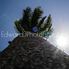 Wish Upon A Palm Tree...