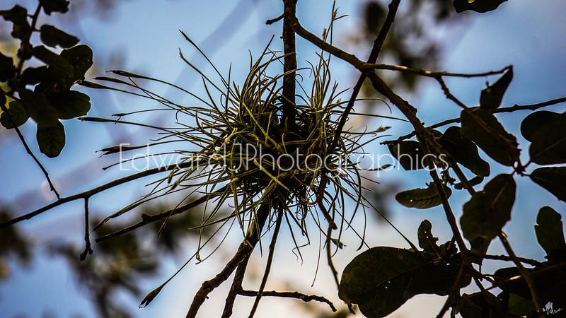 Love Nest...
