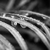 Falling Rain Drops...