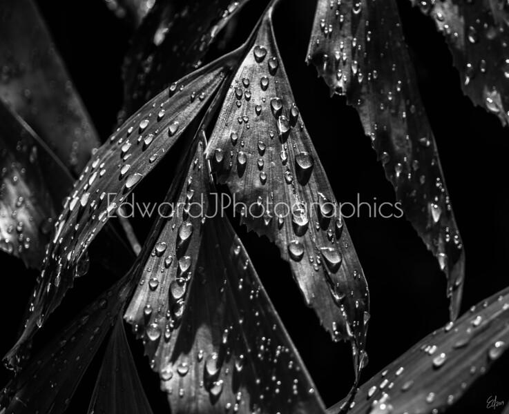 More Rain Drops...