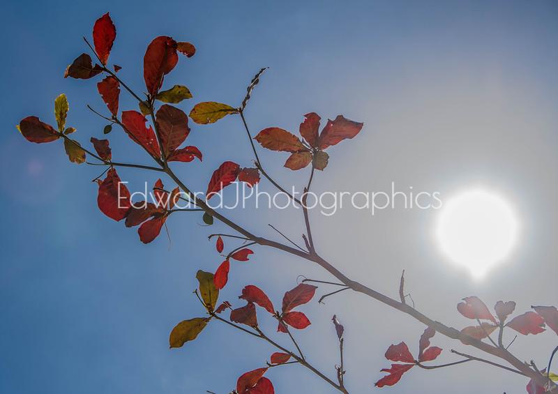 Mid Day Beach Sun Flares...