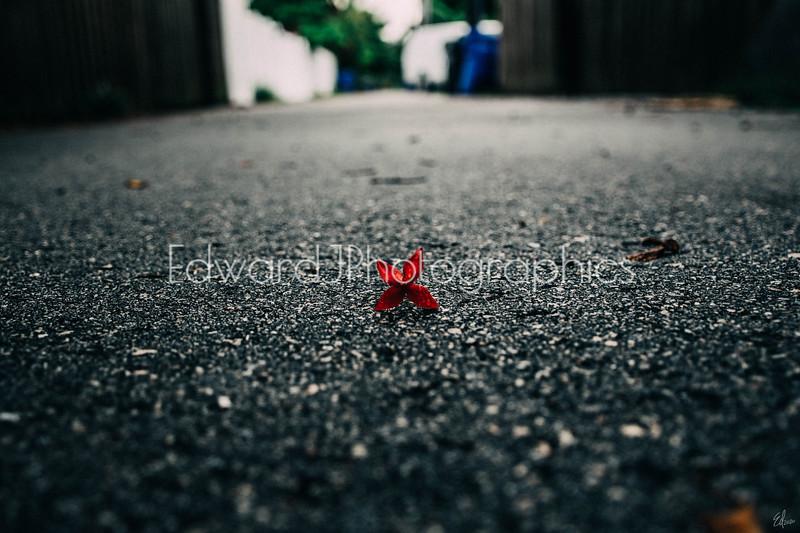 Fallen Broken Little Flower...