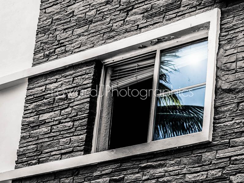Window Reflection...