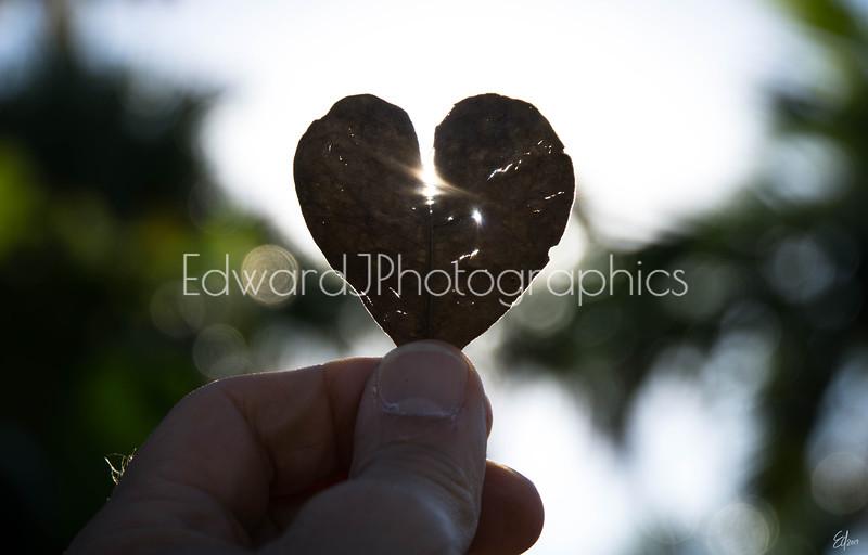 Heart Leaf...