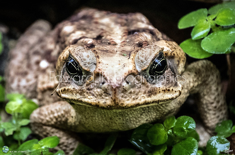 Allo Señor Frog ...