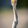Nosey Bird...
