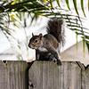 City Squirrel...