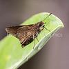 City Moth...