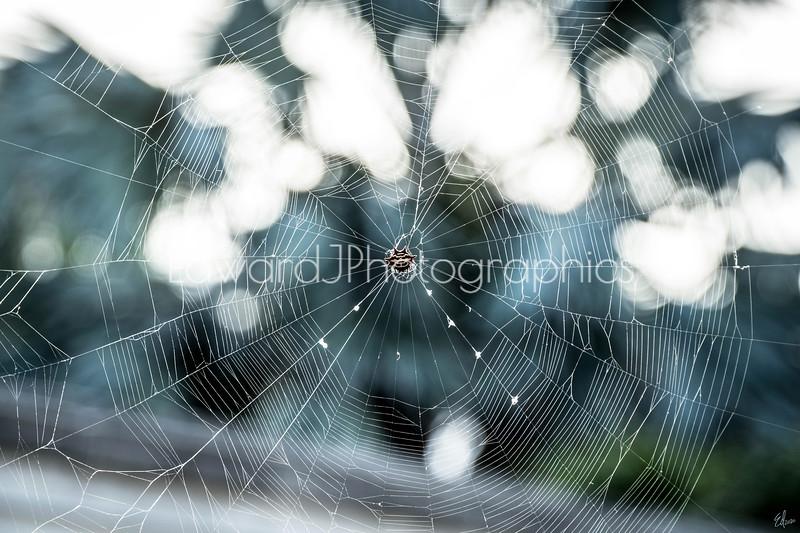 City Spider Web...