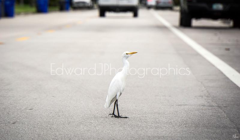 Prancing City Bird...