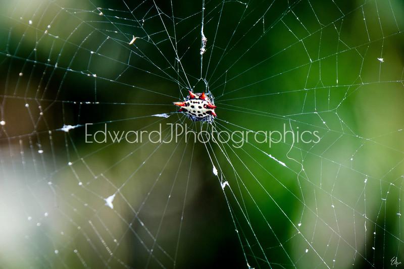 Spider Web...
