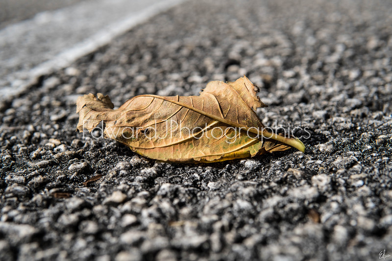 Dried Broken & Fallen Leaf...