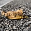 Dried Broken & Fallen Leaf...