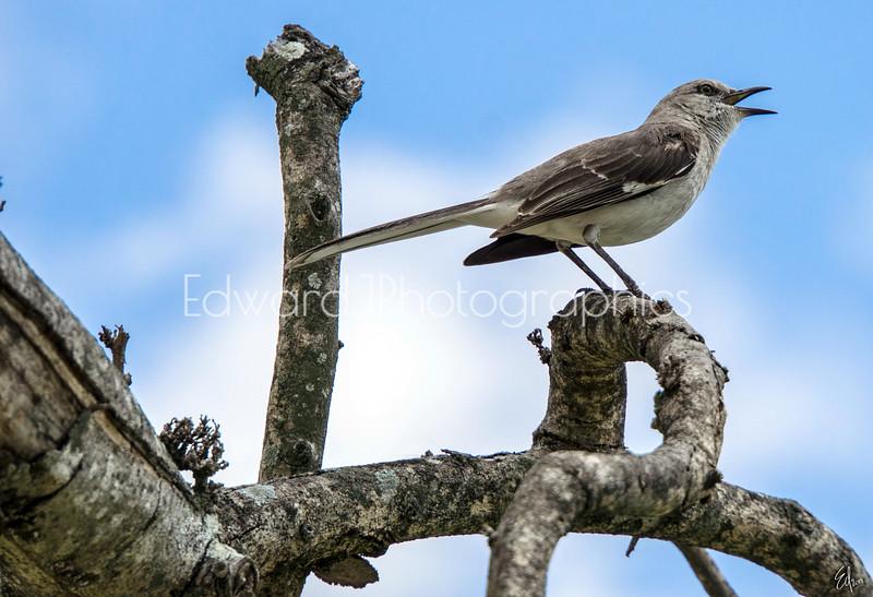 Happy Singing Birdie...