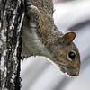 Squirrel Life...
