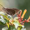 Flower Moth...