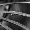 Monochrome Droplets After The Rain...