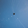 Spider Weaving Web Under The Sunset...