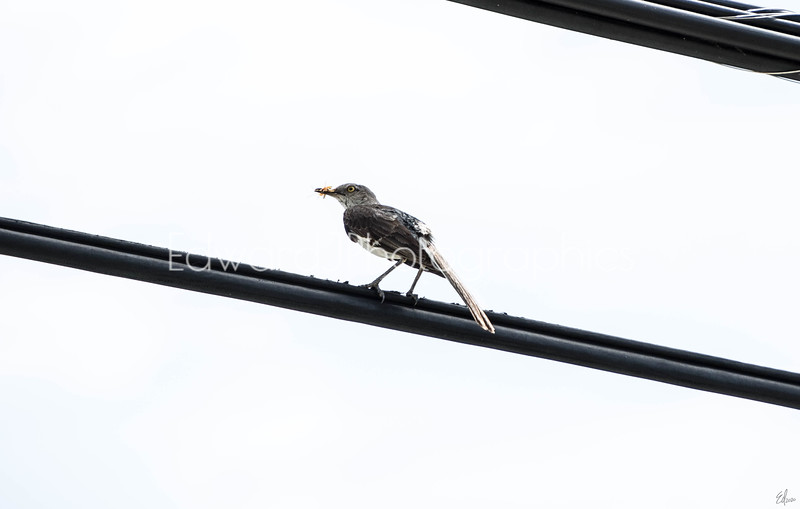 Catch Of The Day... ( Mama Bird)