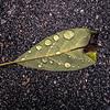 Droplets On A Fallen Leaf