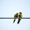 City Love Birds...