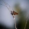 Morning Moth...