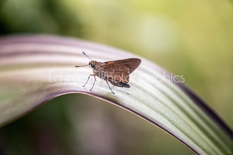 Moth On A Leaf...