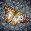 Street Butterfly...