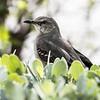 City Bird Pose...