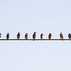 City Birds On A Wire #2 ...
