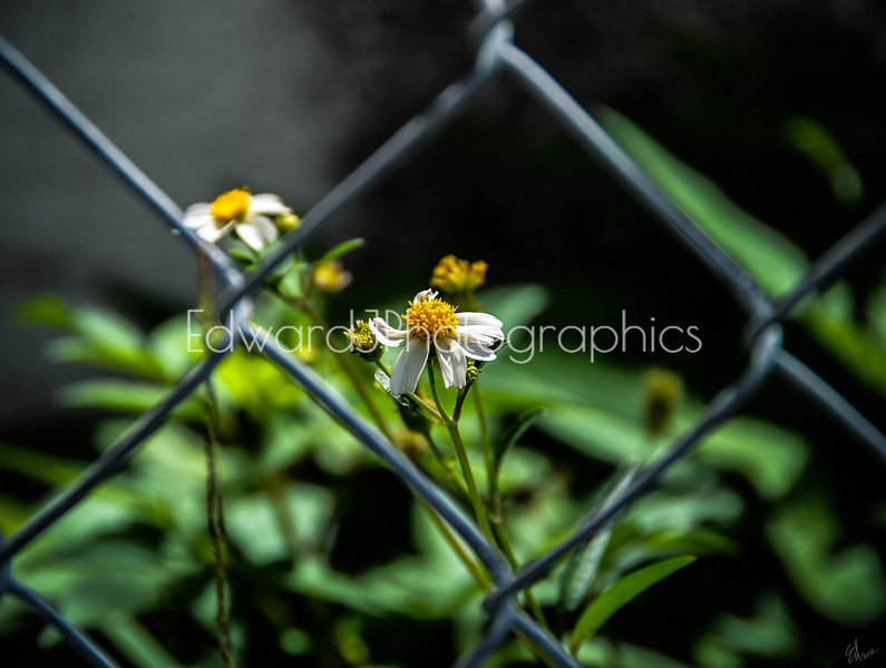 Raw, Wild, Beauty In The Midst Of A Garbage Dump...
