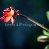 Wild Flower...