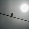 Birdie Morning Sunrise Worship...