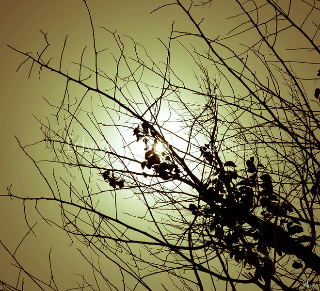 Wish Upon A Tree