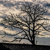 A Cloudy South Florida Sunset Rooftop Tree Silhouette...