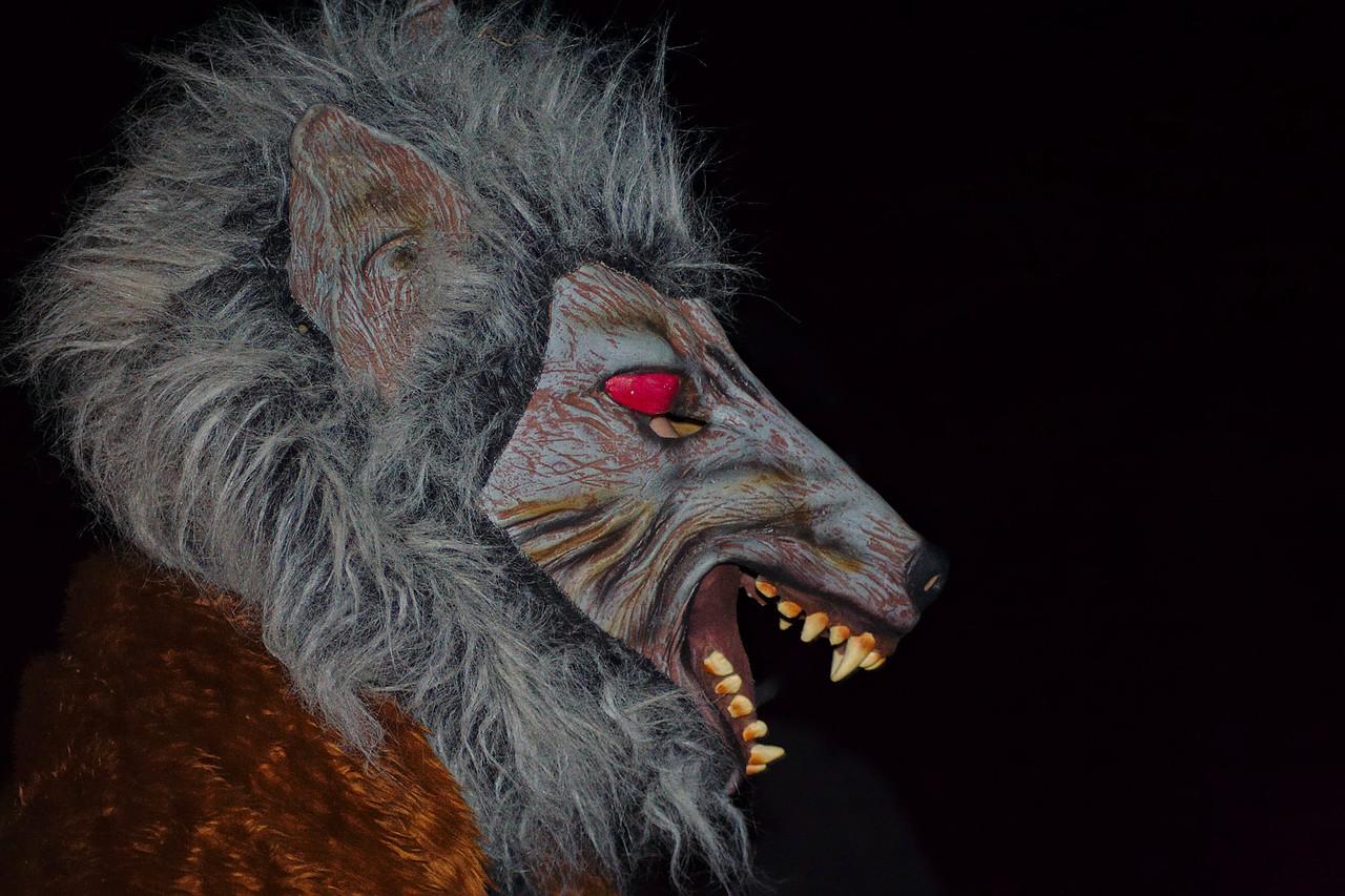 Le loup a été réintroduit à Jambville