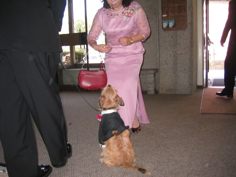 Ceremony - Benji gets a treat from Mrs  Hu