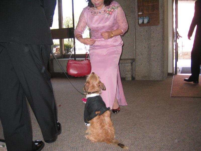 Ceremony - Benji gets a treat from Mrs  Hu