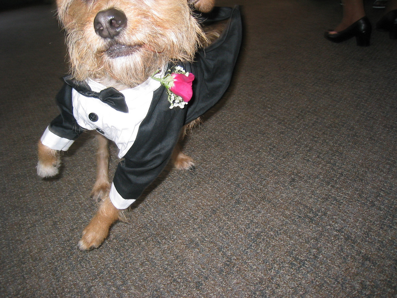 Ceremony - Anxious Ring dog Benji