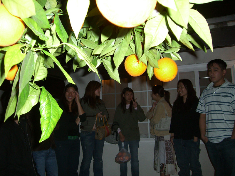 2006 05 05 Fri - Oranges with flash