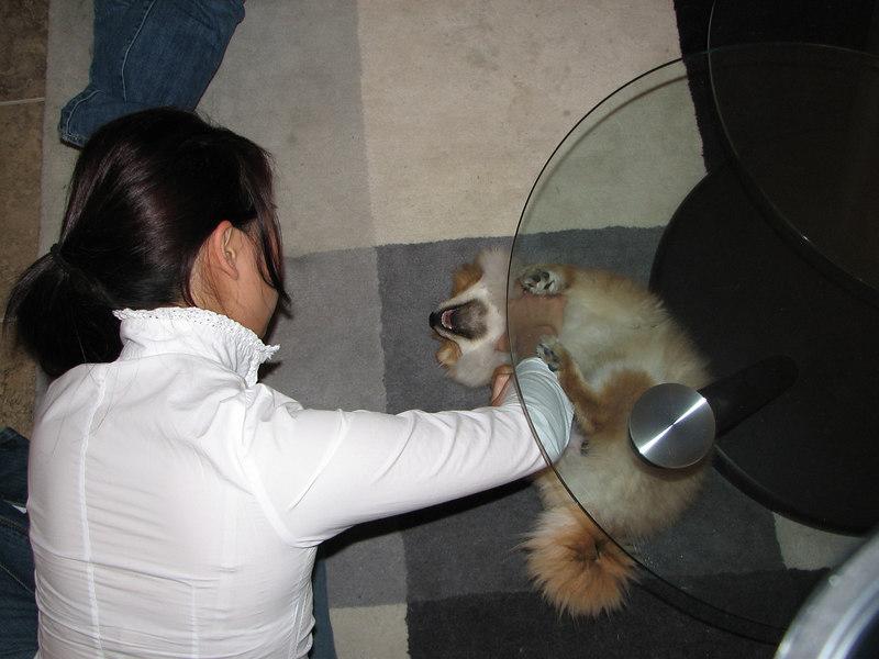 2006 12 10 Sun - Julienne abusing Rocky
