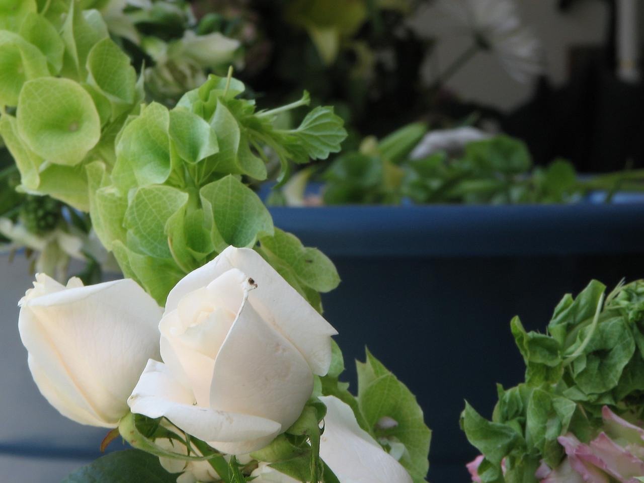 2007 06 09 Sat - White roses et al