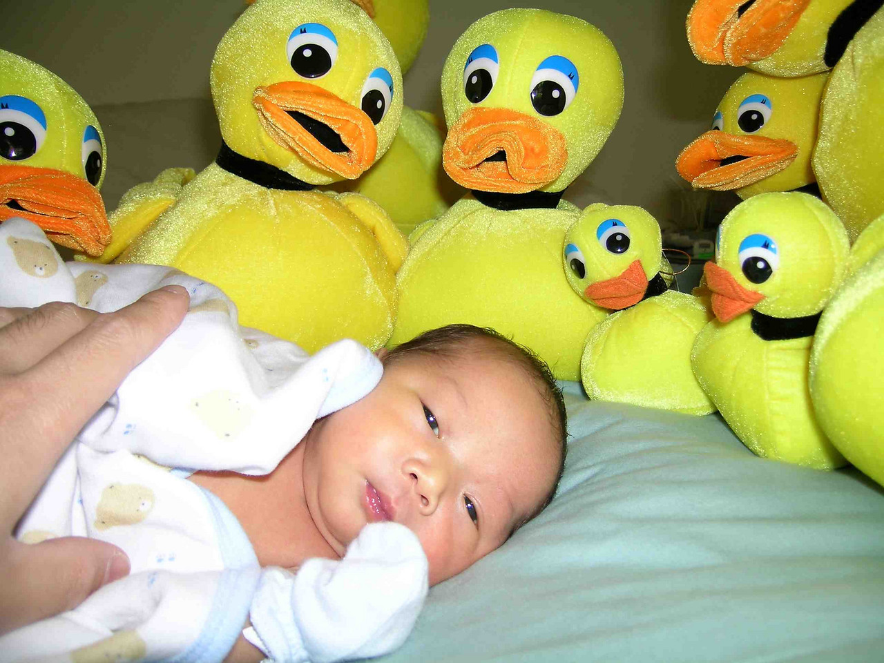 Family of ducks close in on Ally