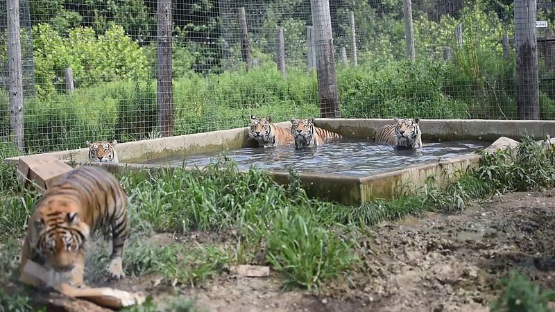 15-07-15 Chloe Cubs 1