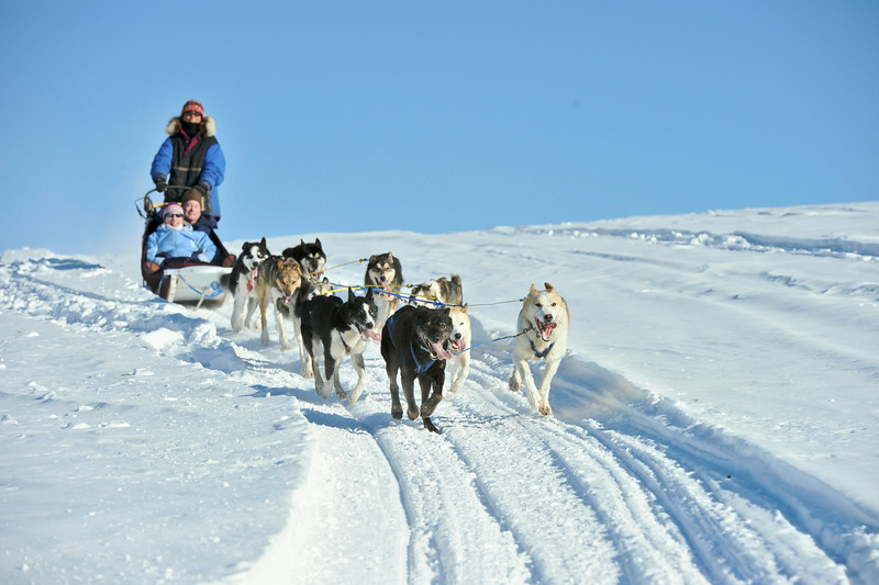 DOG MUSHING - © State of Alaska/Matt Hage