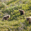 NATURE/WILDLIFE VIEWING - © State of Alaska/Michael DeYoung